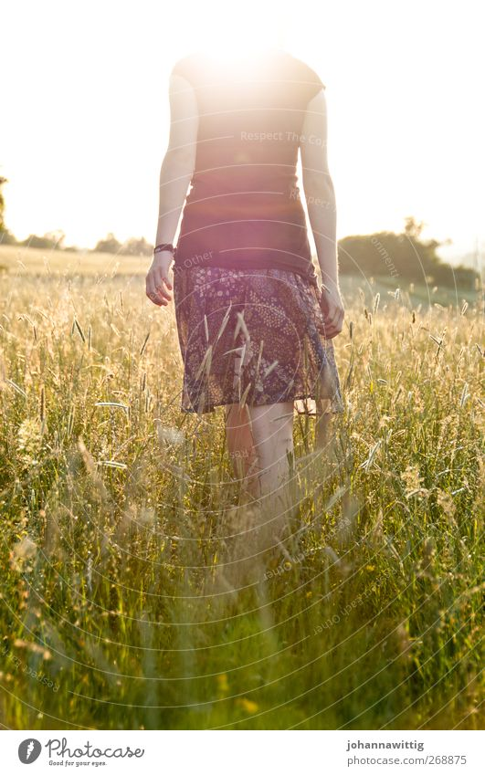 headless. Feminine Young woman Youth (Young adults) Body 1 Human being 18 - 30 years Adults Nature Sunrise Sunset Sunlight Summer Beautiful weather Plant Grass