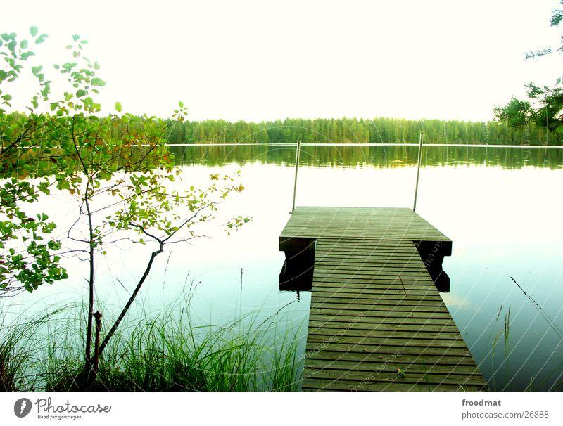 complete silence Footbridge Finland Lake Tree Calm Mirror Surface of water Heavenly Forest Cold Relaxation Grass Common Reed Beach Green Overexposure White