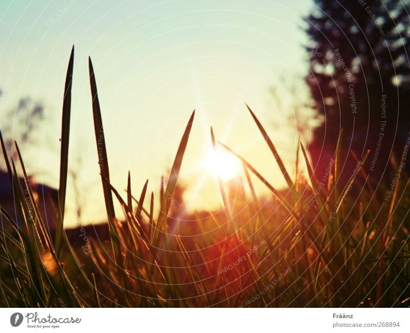 The Sunset Nature Landscape Sky Sunrise Sunlight Spring Beautiful weather Grass Garden Think To enjoy Looking Dream Faded Free Uniqueness Warmth Multicoloured