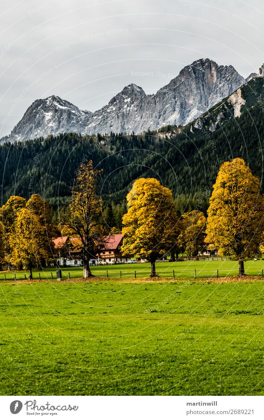 Tree guard in front of the Dachstein massif in autumn Vacation & Travel Tourism Trip Mountain Hiking Nature Landscape Clouds Autumn Meadow Alps Austria