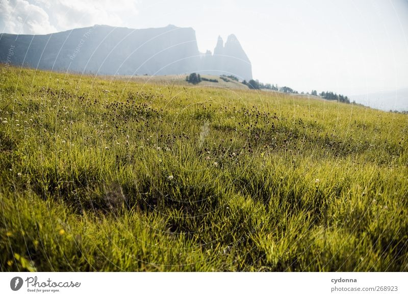 Nature Vacation & Travel Summer Calm Relaxation Far-off places Environment Landscape Meadow Life Mountain Grass Lanes & trails Dream Horizon Hiking