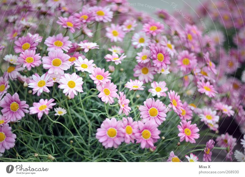 Nature Plant Summer Flower Leaf Spring Garden Blossom Violet Blossoming Bouquet Fragrance Garden plants