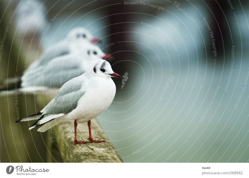 ready-made seagulls Environment Nature Animal Elements Harbour Wild animal Bird Wing 3 Group of animals Wood Stand Wait Authentic Cold Small Funny Natural Cute