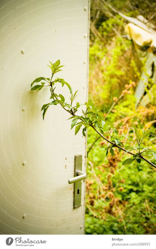 Nature Old Plant Summer Spring Garden Door Natural Growth Authentic Change Uniqueness Transience Decline Within Door handle