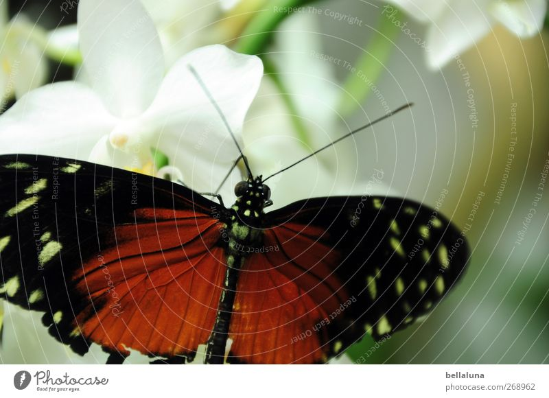 Nature White Green Beautiful Plant Flower Animal Black Blossom Brown Wild animal Sit Elegant Natural Esthetic Wing