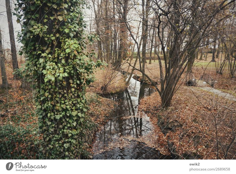 flowing Environment Nature Landscape Plant Winter Tree Bushes Ivy Park Brook Lanes & trails Calm Idyll Flow Peaceful Twigs and branches Tree trunk Overgrown