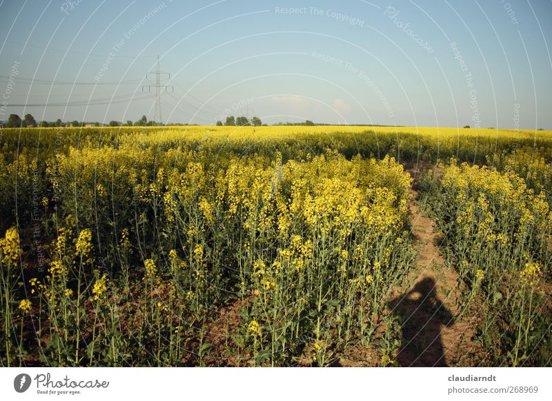 Shadow(s) I Human being Feminine 1 Environment Nature Landscape Plant Sky Cloudless sky Spring Beautiful weather Canola Canola field Field Blossoming Blue