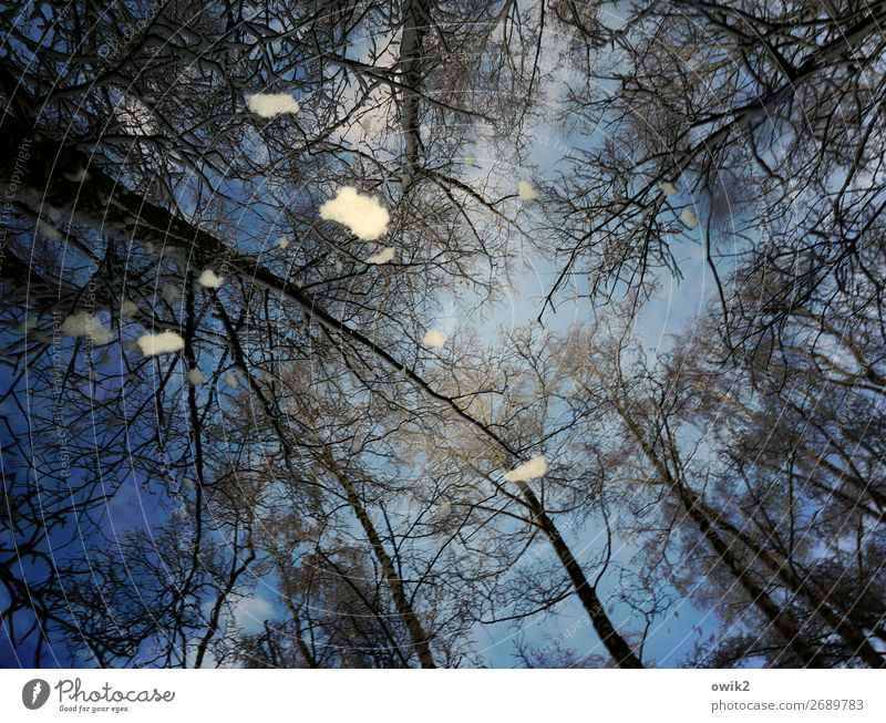 from above Environment Nature Landscape Sky Winter Snow Snowfall Tree Tree trunk Twigs and branches Above Blue Muddled Colour photo Exterior shot Detail