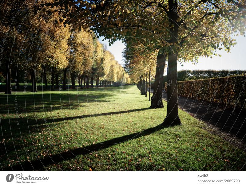 accurateness Landscape Plant Sky Autumn Tree Grass Park Herrenhäuser Gardens Together Accuracy Planning Precision Hedge Row of trees Direct Baroque garden