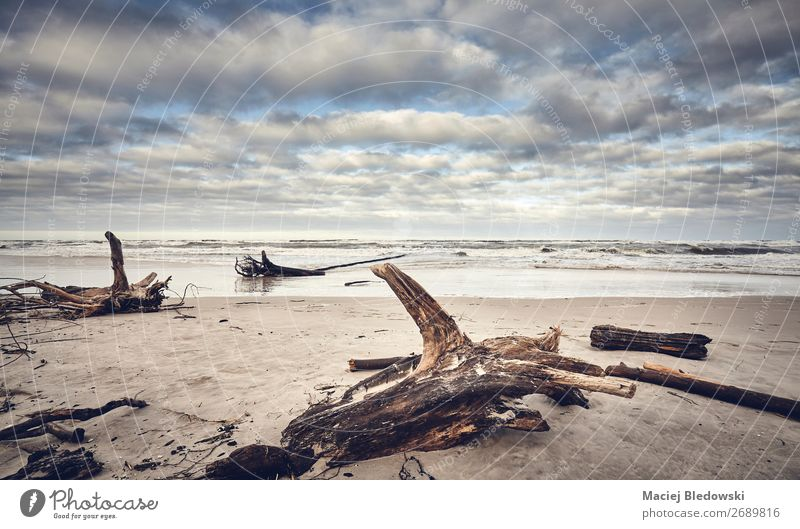 Beach after a storm with stumps and wood Far-off places Ocean Island Environment Nature Landscape Sand Weather Storm Wind Gale Tree Coast Nostalgia seascape
