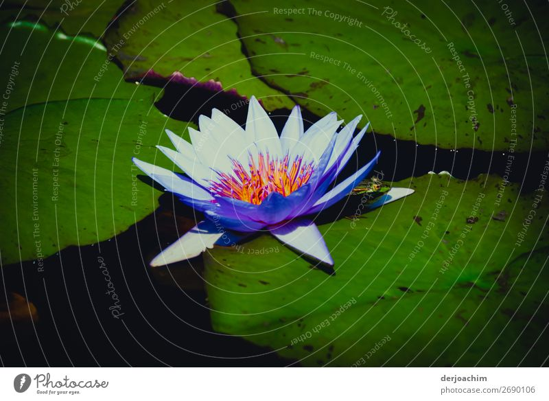 a dream (with frog) Trip Summer Nature Plant Water Sun Beautiful weather Park Observe Discover To enjoy Illuminate Looking Exceptional Fantastic Multicoloured