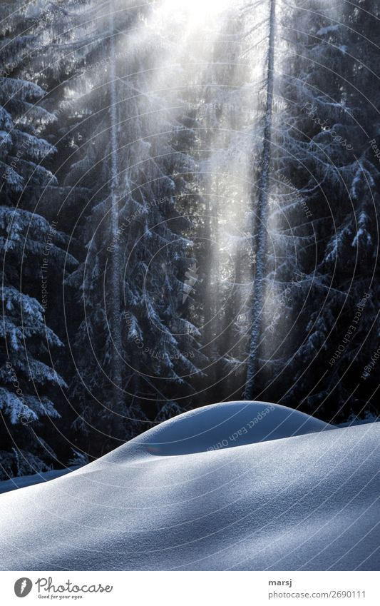 Calm Forest Winter Snow Snowfall Illuminate Dream Well-being Harmonious Meditation Smooth Snowscape Awareness Winter vacation Snowy hill