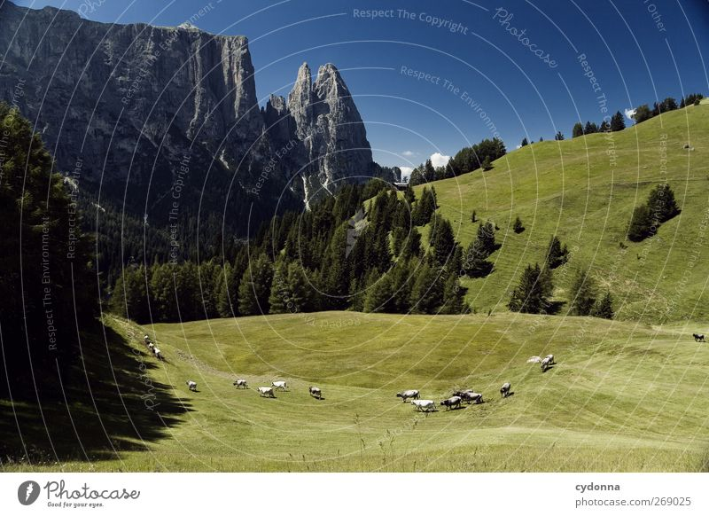 Alpe di Siusi Harmonious Well-being Relaxation Calm Vacation & Travel Tourism Trip Far-off places Freedom Hiking Environment Nature Landscape Sky Summer