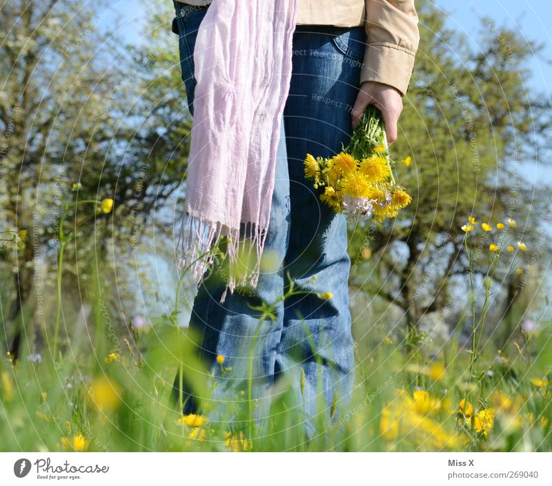 Picked Human being Feminine Woman Adults 1 Nature Plant Spring Beautiful weather Flower Grass Blossom Garden Meadow Scarf Emotions Infatuation Romance Bouquet