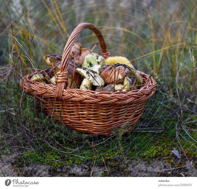 edible wild mushrooms Vegetable Vegetarian diet Nature Autumn Grass Forest Fresh Natural Wild Brown Yellow Green White Ground background Basket Edible food
