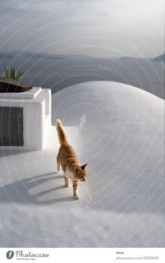 life Beautiful weather Fira Wall (barrier) Wall (building) Roof Animal Pet Cat 1 Movement Walking Colour photo Exterior shot Deserted Copy Space top