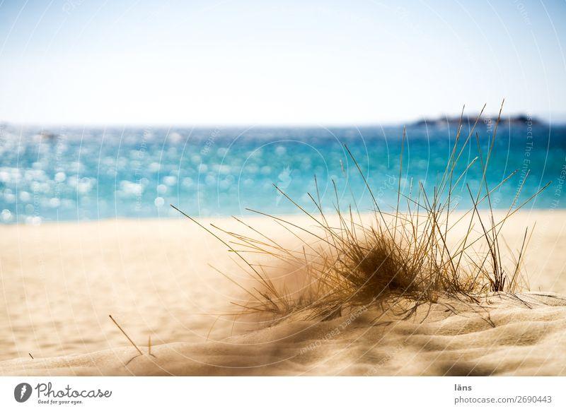 beach day Beach Sand Sun Vacation & Travel Warmth Ocean Sky Grass Majorca