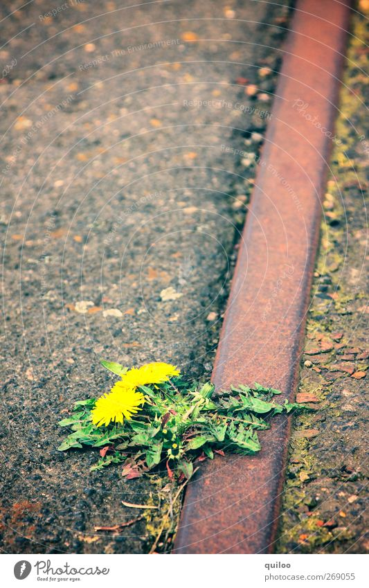 green Environment Nature Plant Blossom Dandelion Transport Rail transport Railroad tracks Threat Gloomy Brown Yellow Green Fear Distress Sustainability Feeble