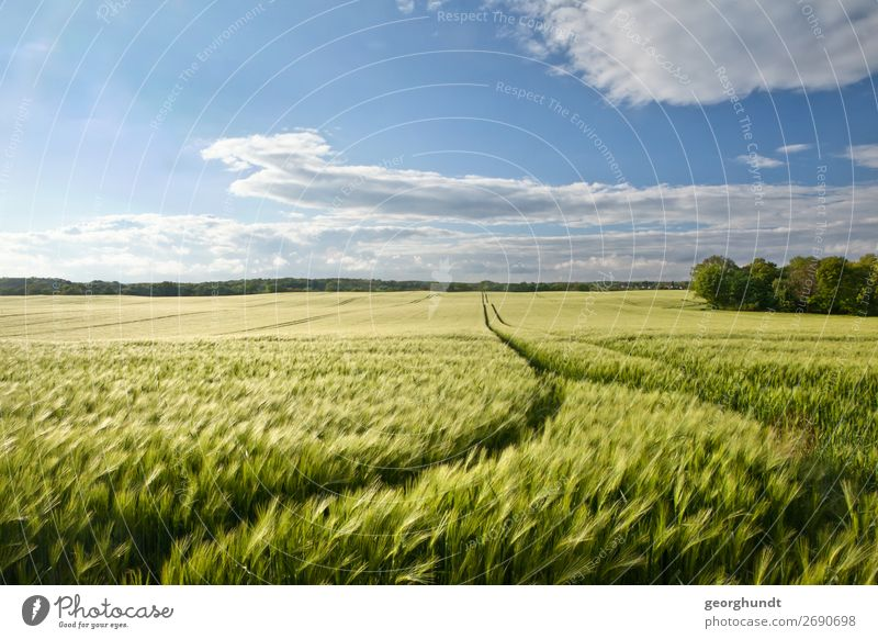 widebarley Vacation & Travel Tourism Hiking Environment Nature Landscape Plant Sky Horizon Spring Summer Meadow Field Overpopulated Barley Barleyfield