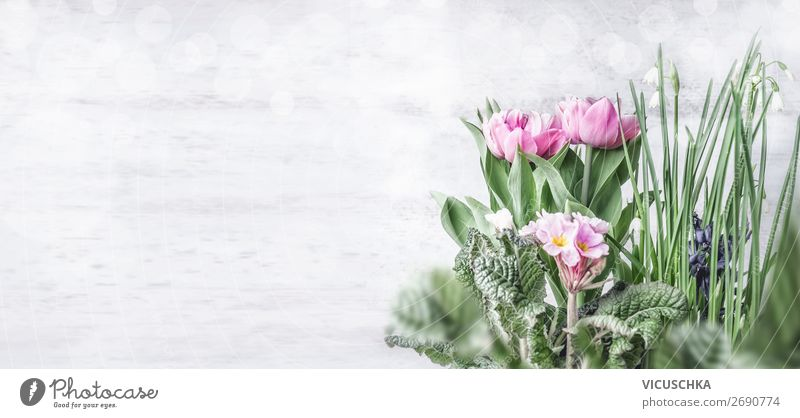 Spring Flowers Background Style Design Garden Nature Plant Tulip Leaf Blossom Wall (barrier) Wall (building) Decoration Bouquet Pink Background picture
