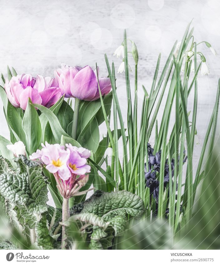 Various spring flowers Design Garden Nature Plant Spring Flower Tulip Decoration Bouquet Background picture Spring flower Lily of the valley Primrose