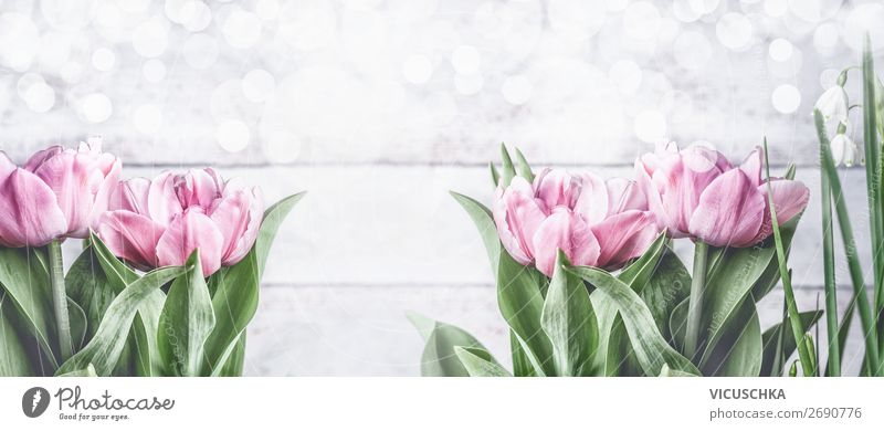 Spring background with pink tulips Style Design Garden Feasts & Celebrations Nature Plant Flower Tulip Leaf Blossom Decoration Bouquet Flag Blossoming Pink