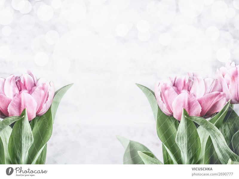 Pink tulips on white background Style Design Feasts & Celebrations Mother's Day Easter Wedding Birthday Nature Plant Spring Flower Tulip Decoration Bouquet