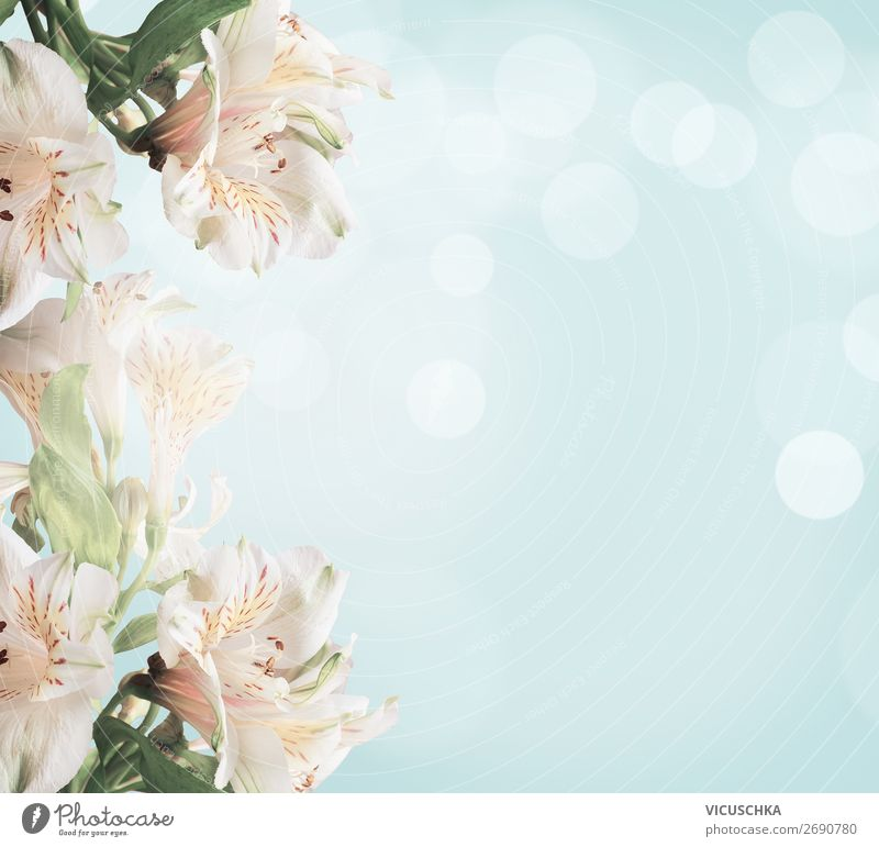 White flowers on light blue background with green leaves and bokeh. Abstract floral background. Spring nature white abstract spring soft card leaf day color