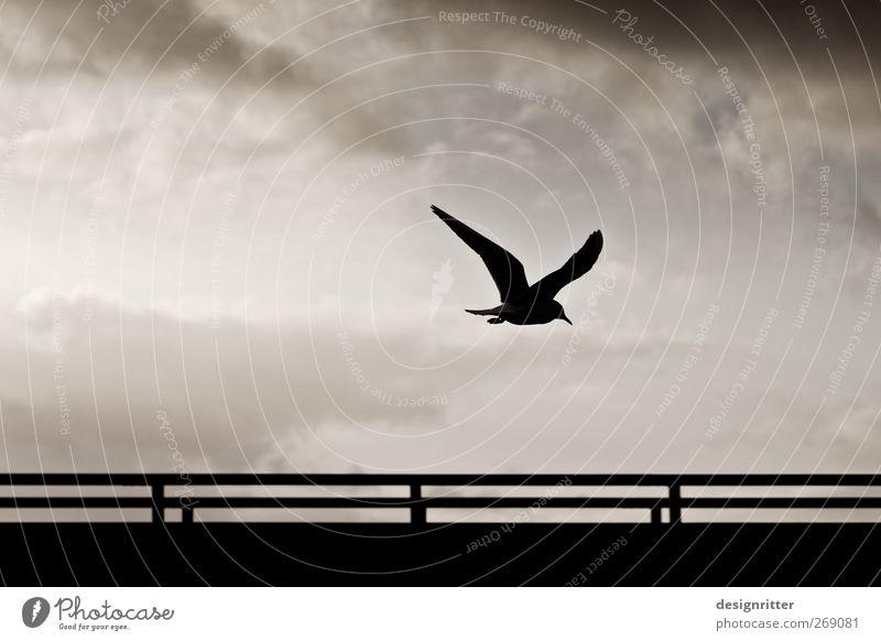 The last word Environment Sky Clouds Wild animal Bird Wing Seagull seabird 1 Animal Flying Dark Free Hope Longing Homesickness Wanderlust Freedom Peace