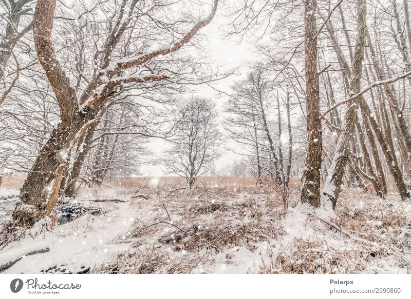 Snow in a forest with barenaked trees in snowy weather Beautiful Winter Christmas & Advent Environment Nature Landscape Sky Weather Fog Tree Grass Forest