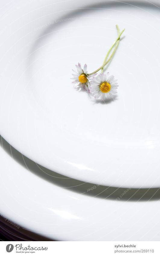 hare meal Nutrition Organic produce Vegetarian diet Diet Fasting Crockery Plate Nature Plant Spring Summer Flower Wild plant Blossoming Lie Beautiful Kitsch