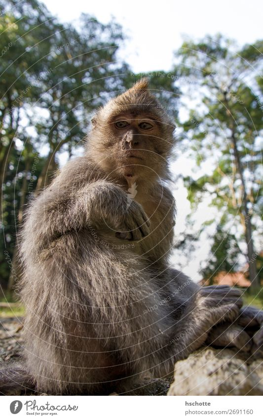 What do you want? What do you want? - Monkey watches and waits Environment Nature Animal Sun Summer Tree Grass Forest Virgin forest Wild animal Pelt monkey 1