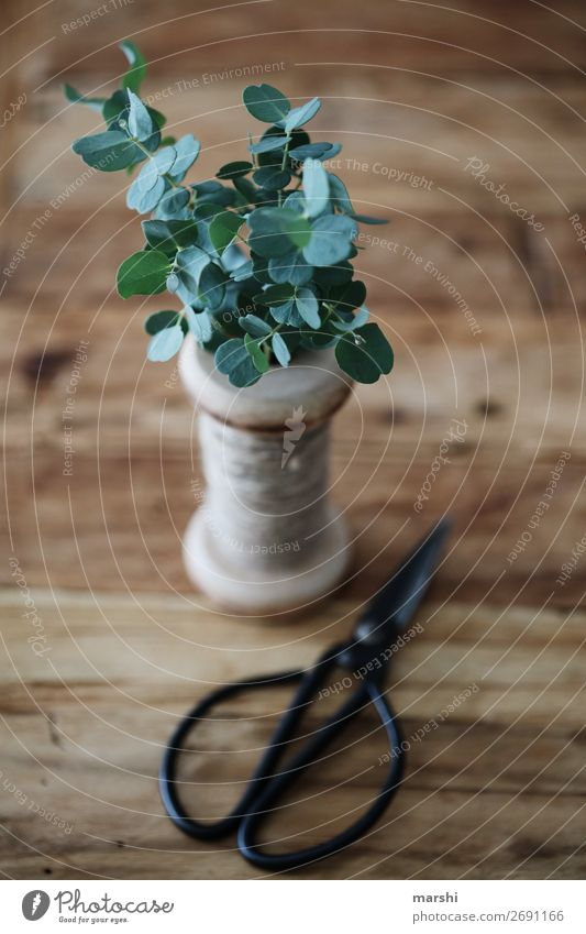 eucalyptus Nature Plant Leaf Foliage plant Emotions Craft (trade) Floristry Eucalyptus blossom Decoration Green Vintage Scissors Gardening Still Life Natural