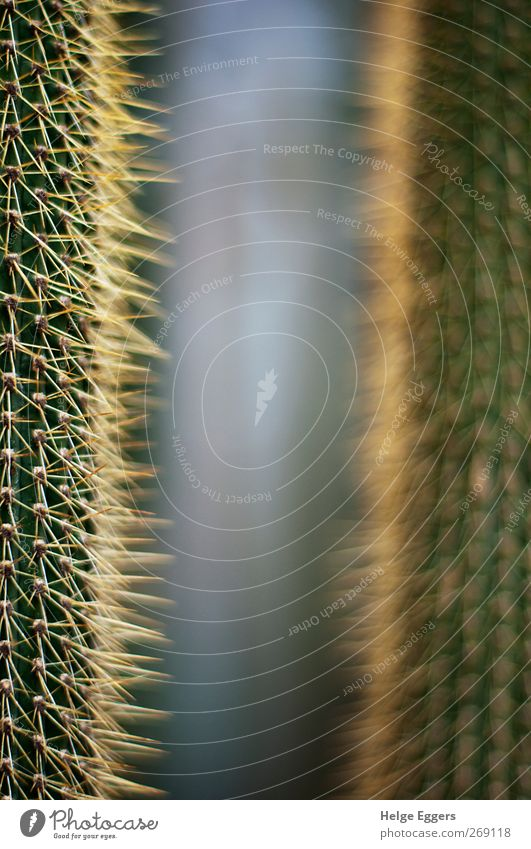 Proximity and distance Plant Cactus Exotic Poverty Past Future Allegory Point Soft Colour photo Interior shot Close-up Detail Shallow depth of field