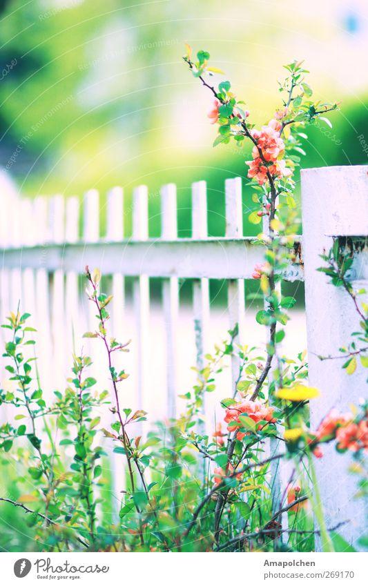 Nature Plant Flower Relaxation Environment Blossom Meadow Grass Death Garden Park Bushes Happiness Climate Joie de vivre (Vitality) Protection