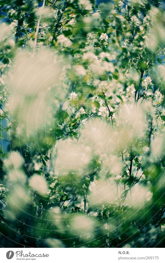 Sea of flowers I Environment Nature Plant Sky Spring Beautiful weather Bushes Garden Park Meadow Blue Green Apocalyptic sentiment Threat Environmental pollution