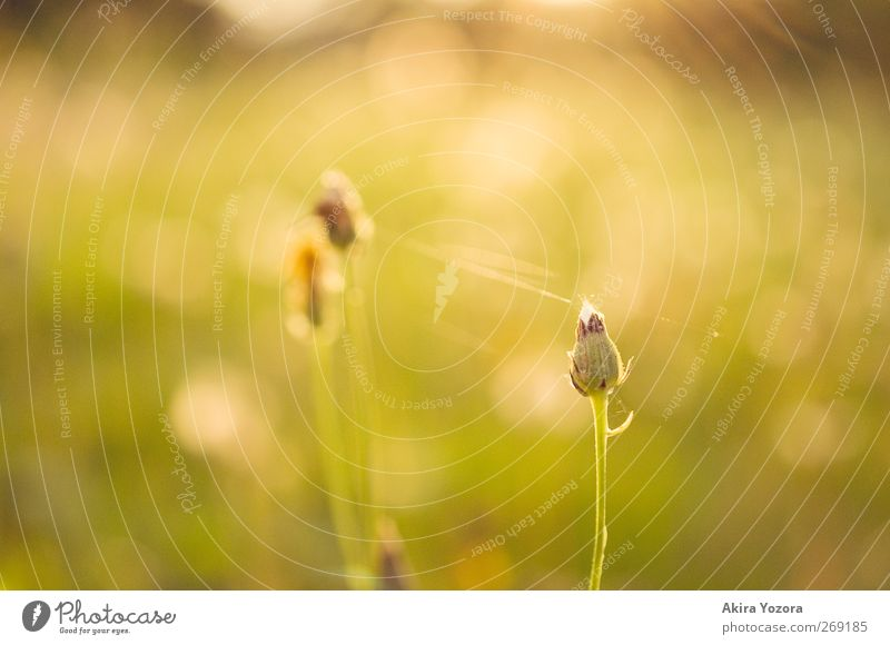 separated but connected. Nature Landscape Sunrise Sunset Sunlight Spring Summer Beautiful weather Plant Flower Blossom Garden Meadow To hold on Natural Warmth