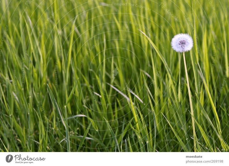 Nature Green Plant Flower Environment Meadow Spring Grass Happy Contentment Well-being Expedition Foliage plant