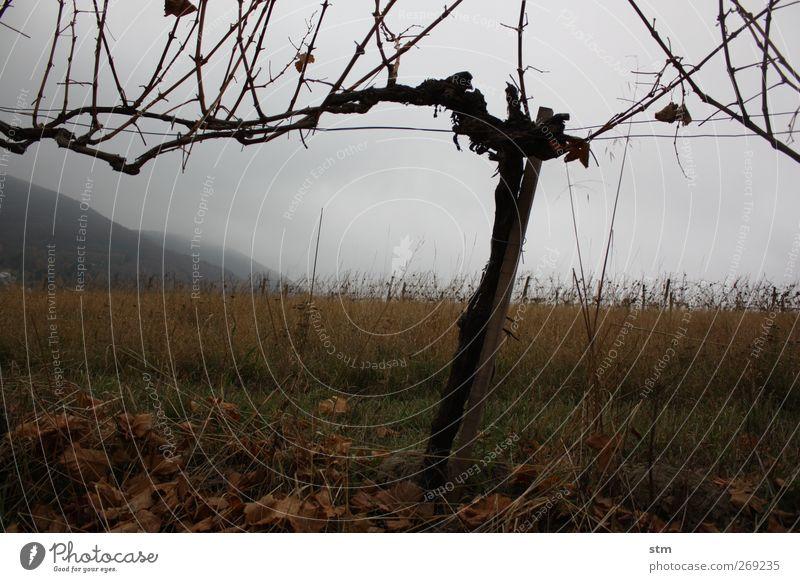 Sky Nature Plant Leaf Clouds Loneliness Calm Landscape Death Autumn Wood Earth Elements Vine Branch Hill