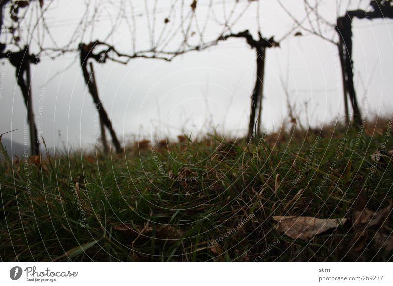 Sky Nature Plant Leaf Clouds Calm Landscape Death Autumn Grass Sadness Earth Grief Vine Hill Longing
