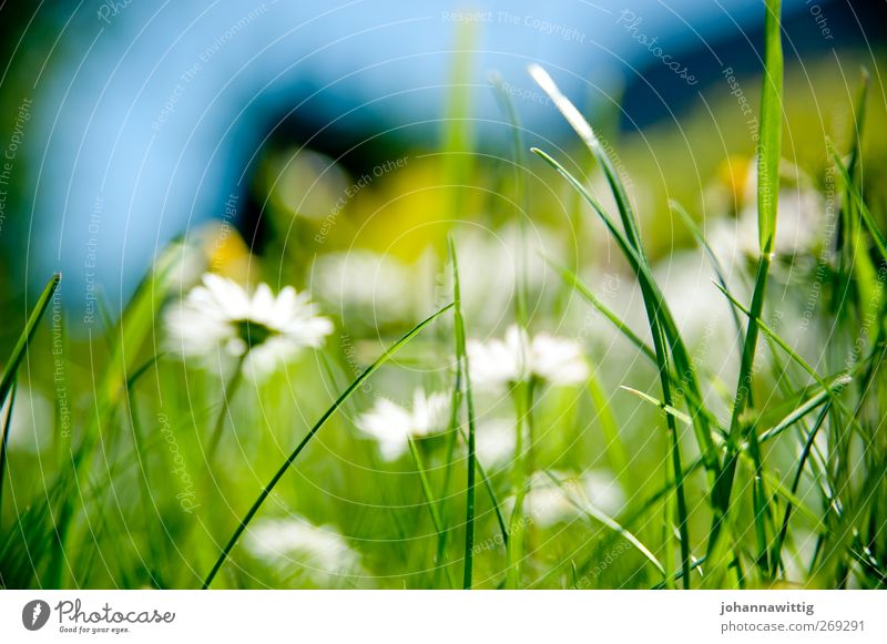 Nature Blue Green Plant Environment Grass Spring Bright Crazy Flashy Gaudy Sated
