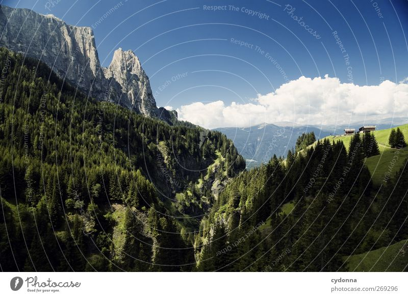 Sky Nature Vacation & Travel Summer Calm Forest Relaxation Far-off places Environment Landscape Mountain Freedom Dream Horizon Hiking Trip