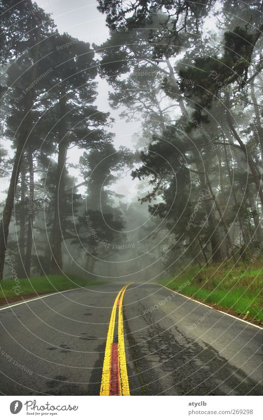 The way Vacation & Travel Far-off places Freedom Nature Landscape Animal Fog Rain Plant Tree Grass Transport Motoring Street Driving Town Brown Yellow Gray