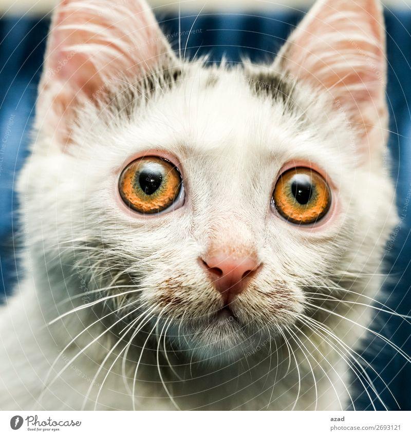 look at me Eyes Desire Pet Watchfulness
