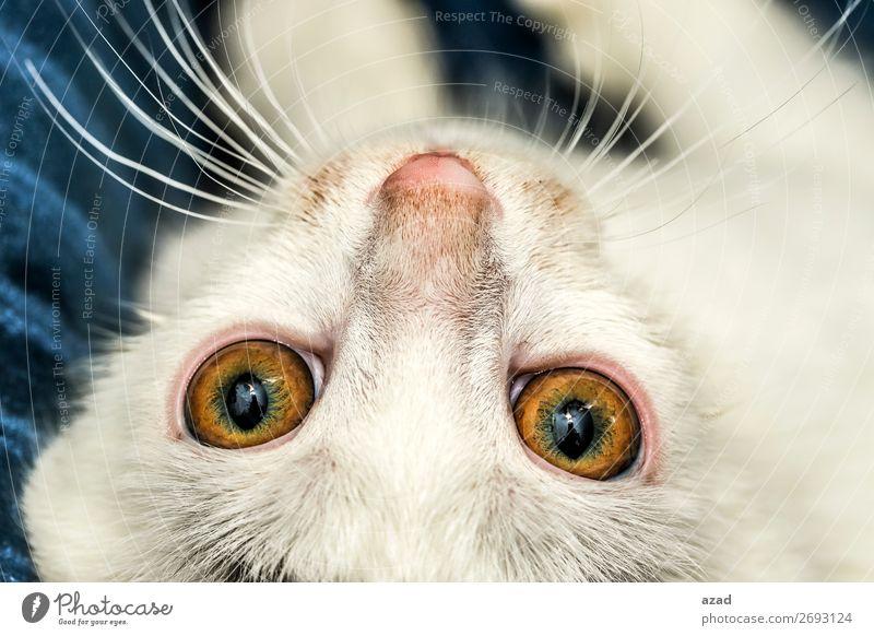 cat eyes Animal Pet Watching TV