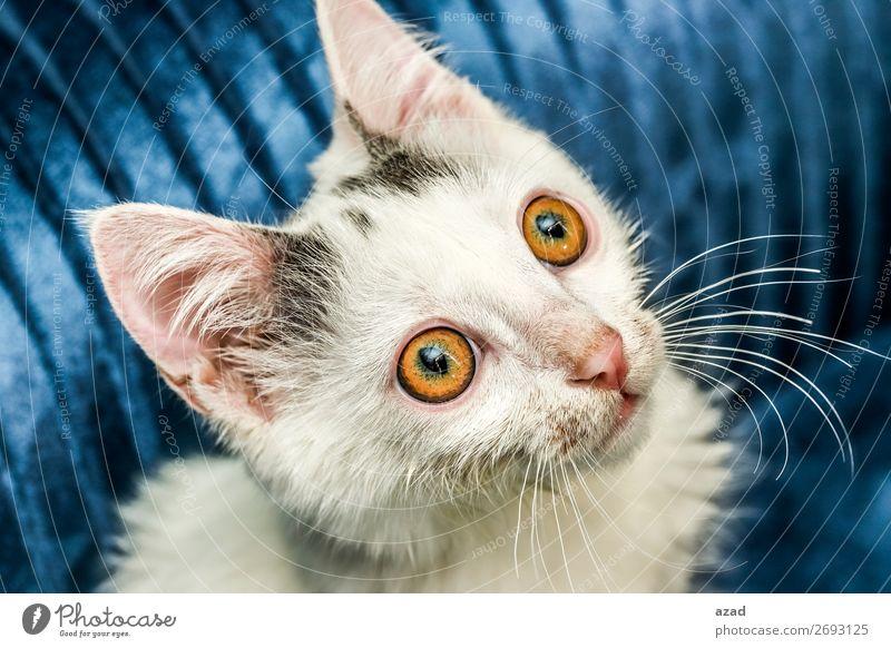 cat Pet Fear Eyes watch Colour photo Macro (Extreme close-up) Flash photo Upward