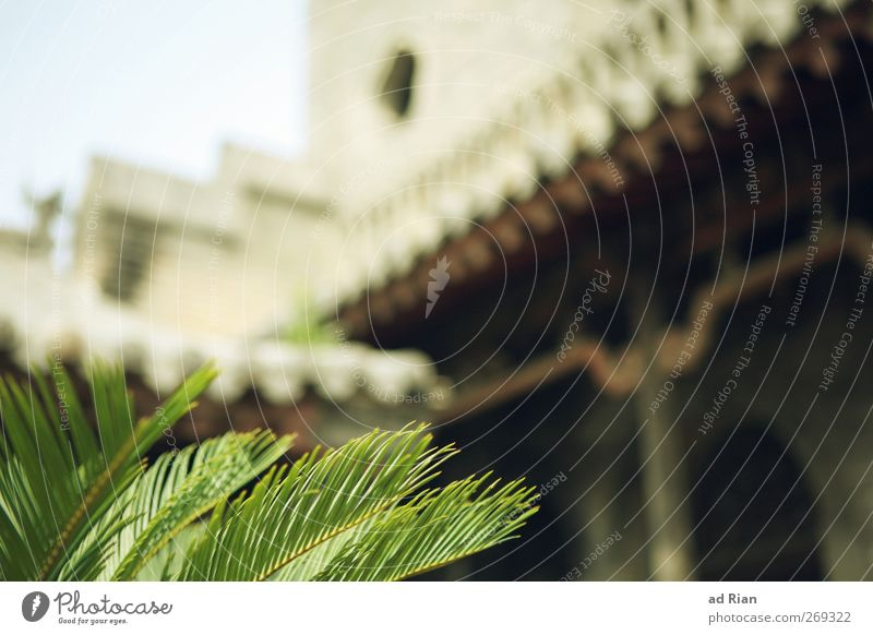 Palace. Sky Cloudless sky Plant Bushes Leaf Foliage plant Palm tree China Village Small Town Downtown Old town Deserted House (Residential Structure)