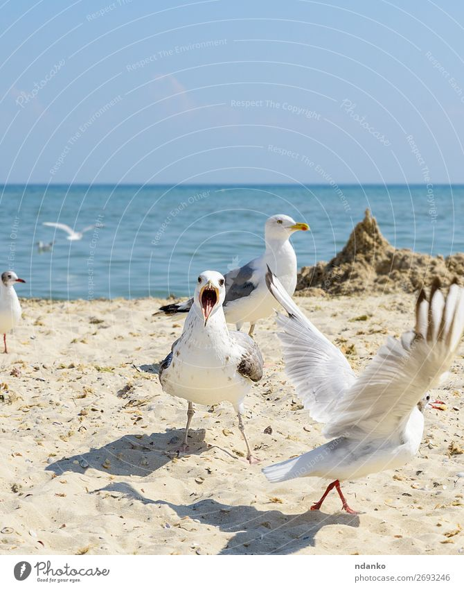 flock of white gulls flies on the Black Sea shore Vacation & Travel Tourism Freedom Summer Beach Ocean Environment Nature Landscape Animal Sand Sky Coast Bird