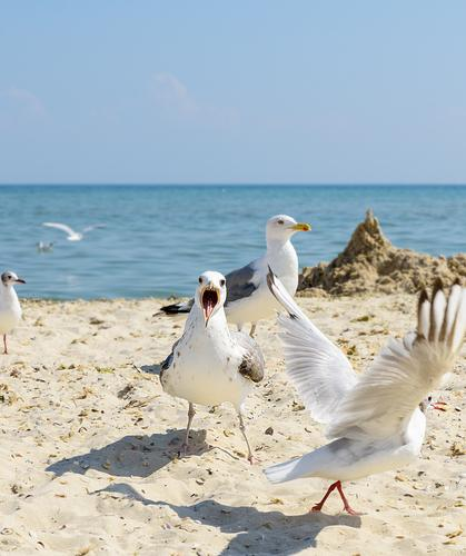 flock of white gulls flies on the Black Sea shore Sky Vacation & Travel Nature Summer Blue White Landscape Ocean Animal Beach Environment Natural Coast Tourism