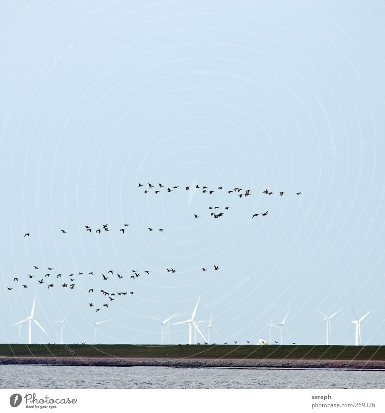 Migratory Birds Gray lag goose Goose Wind energy plant Energy Dam Ocean wadden sea Flock birdwatching Clouds Flying Formation Migration Migratory bird Movement